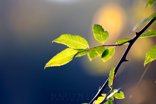 Close up nature image of delicate green leaves in the afternoon sun