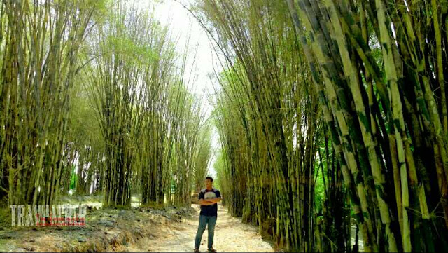 Hutan bambu surabaya, lokais spot foto hits dan instagrambake