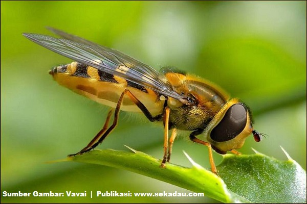 Lebah tidak merusak dimana ia mengambil sari makanan