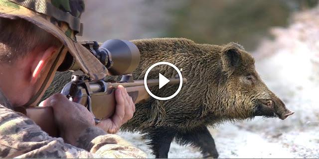 une journée merveilleux de chasse au sanglier dans les montagnes
