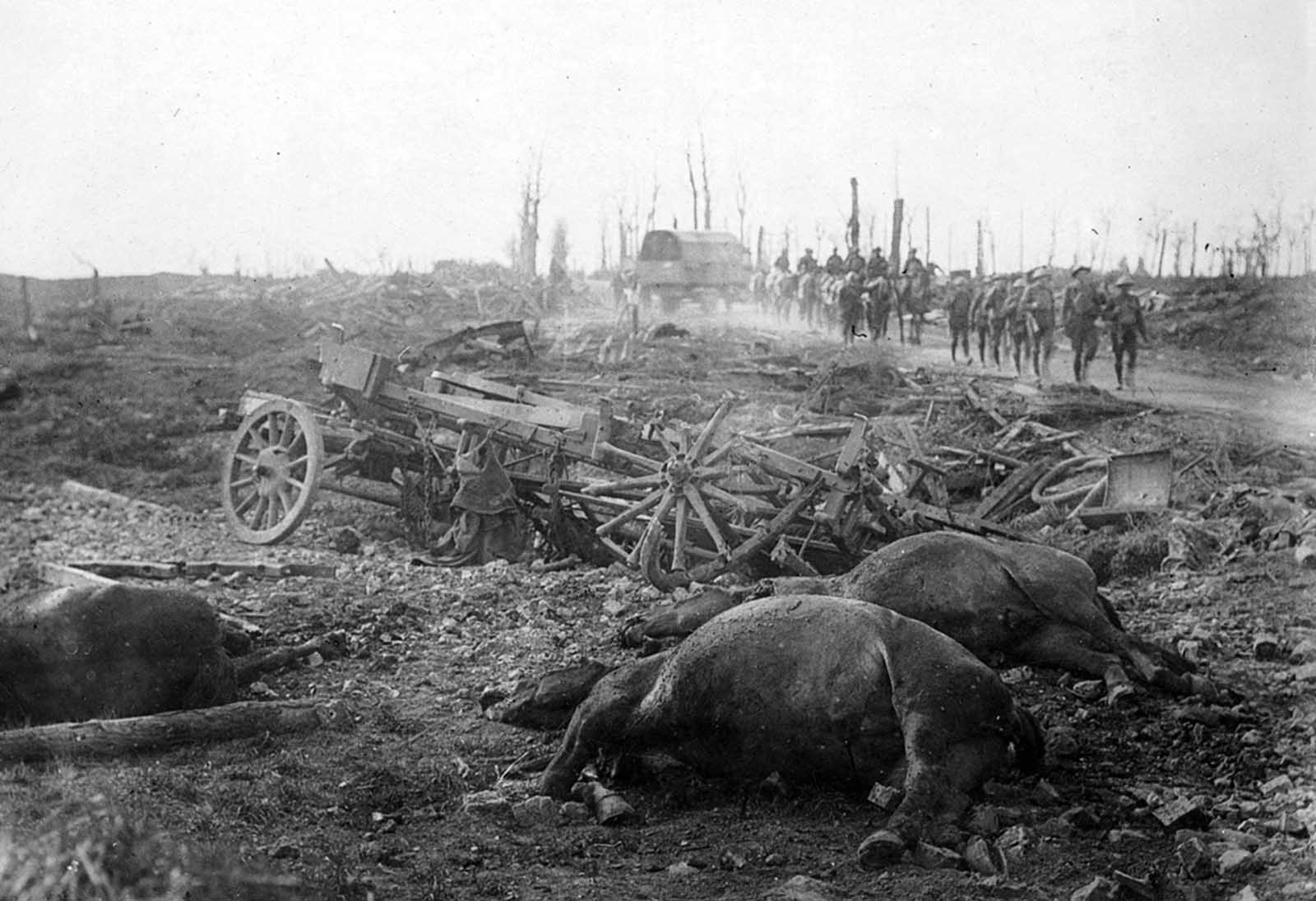 Dead horses and a broken cart on Menin Road, troops in the distance, Ypres sector, Belgium, in 1917. Horses meant power and agility, hauling weaponry, equipment, and personnel, and were targeted by enemy troops to weaken the other side -- or were captured to be put in use by a different army.