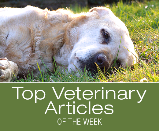 Top Veterinary Articles of the Week: Coccidioidomycosis, Fatty Lumps, and more ...