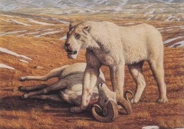 Ilustrasi singa amerika