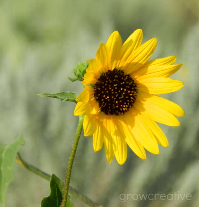 Sunflower Nature Photography: Grow Creative