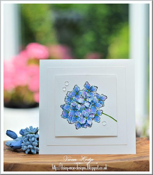 Flowers, Hydrangea, LIM, CAS