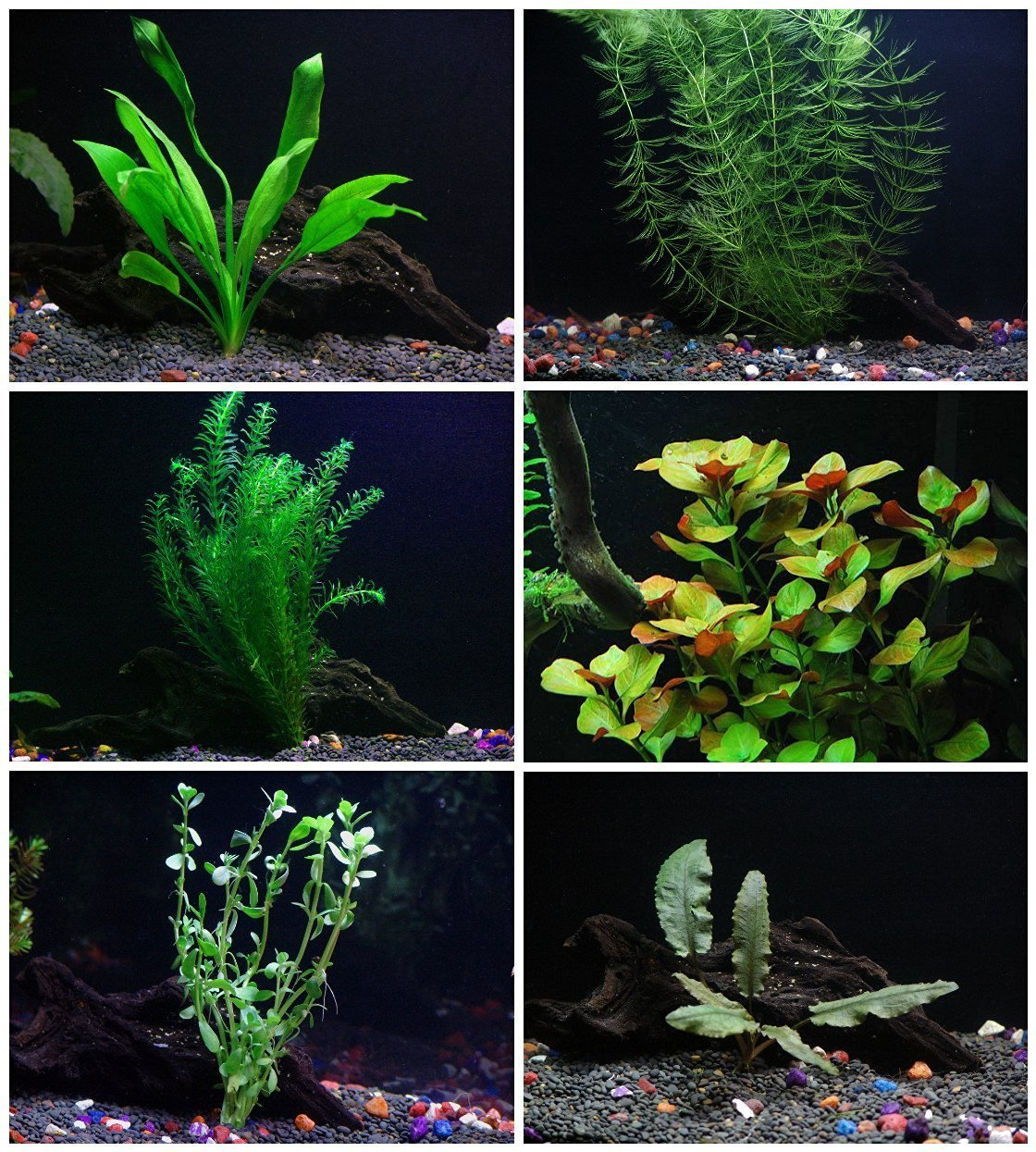 Aquarium Plants Sale Free Shipping