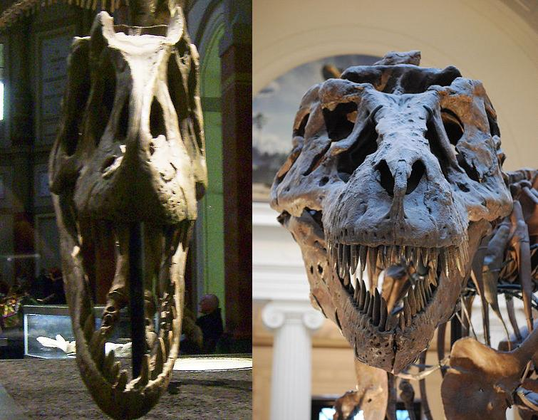 discussion most overrated and underrated dinosaurs or