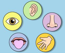 qué cambios sufren tus cinco sentidos en el embarazo embarazo