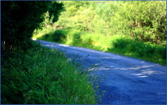 road, summer, light, green, blue,  Summer light © Annie Japaud Photography 2013