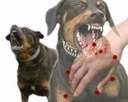 Hasil gambar untuk penyakit Rabies