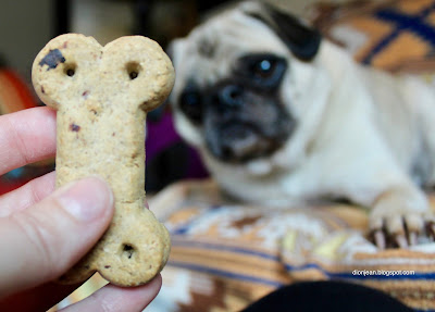 Liam the pug and a cookie