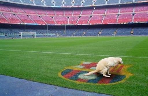 Dog poops on Barcelona crest at Camp Nou