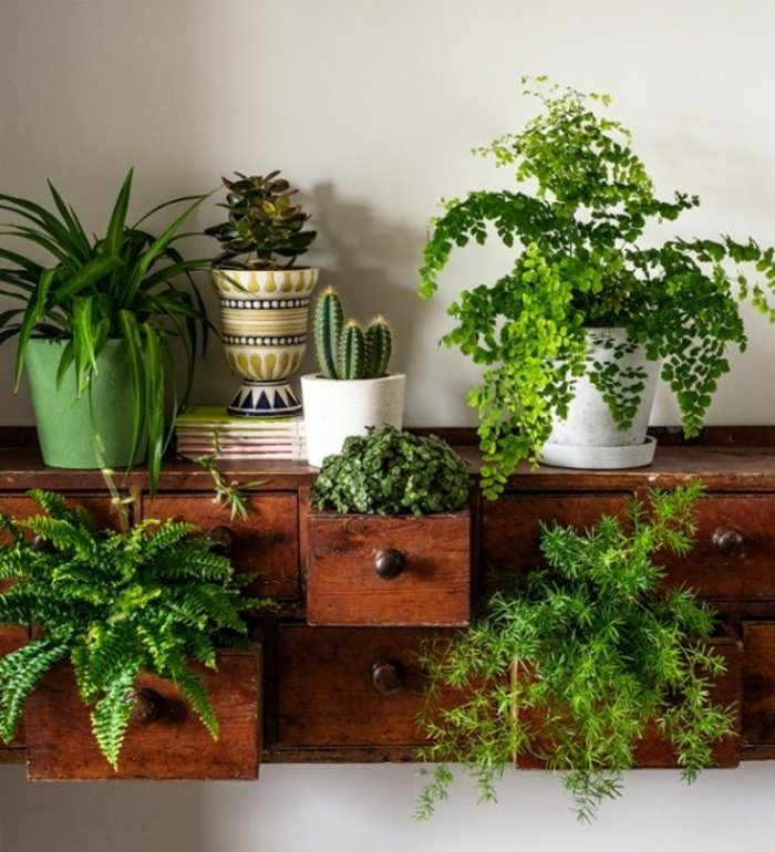 Decorating Your Home With Plants Akamatra