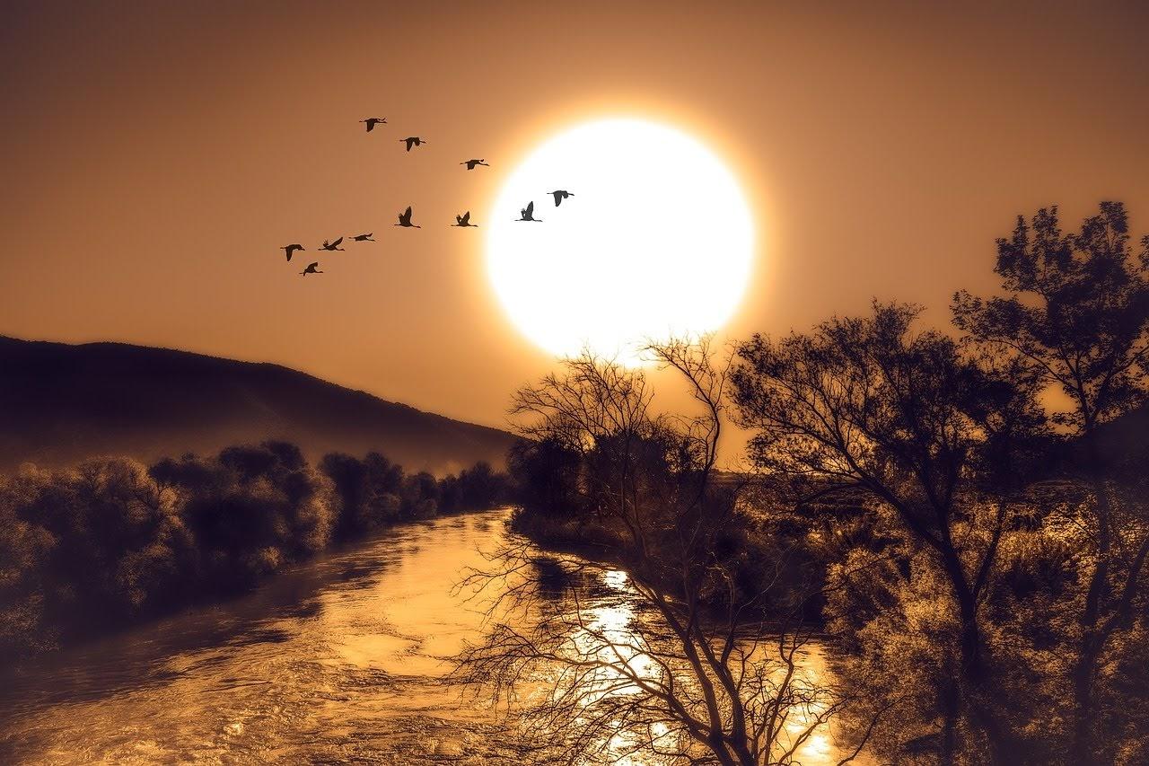 صورة عودة الطيور الى بيوتها اثناء الغروب - اجمل واحلى صور الطبيعة الجميلة والخلابة في العالم