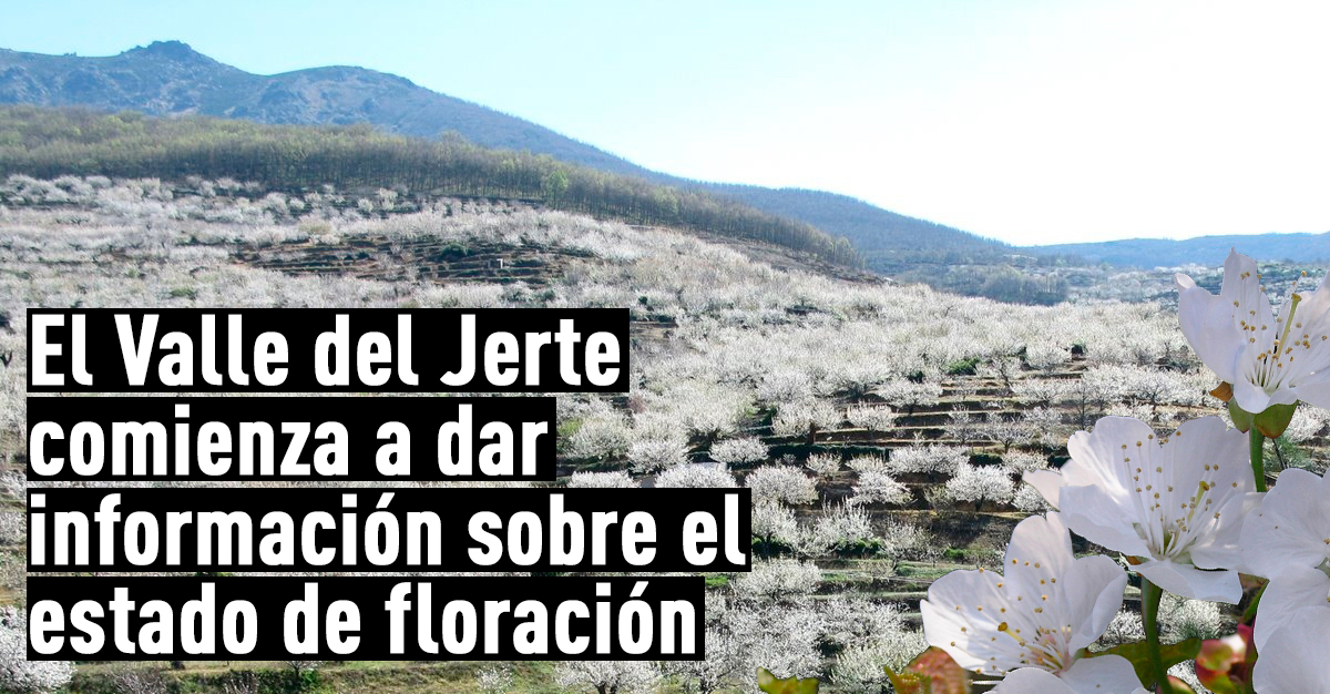 cerezo en flor valle del jerte programa oficial la ForOficina De Turismo Valle Del Jerte