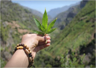 شركة كندية تبحث عن موظفين لتذوق الحشيش The tasting function of cannabis