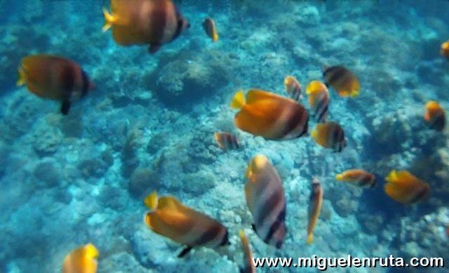 Fauna-marina-Nusa-Penida