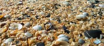 memanfaatkan kulit kerang yang mudah didapatkan di pesisir pantai untuk bahan prakarya anak SD atau siswa SMP dapat mengembangkan kreativitas mereka, bahkan bukan tidak mungkin dapat menjadi komoditas bernilai estetika tinggi dan bernilai jual (ekonomi)