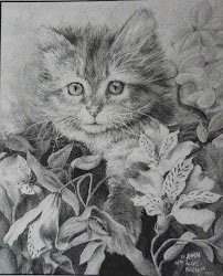 realistic pencil cat drawing drawings animal