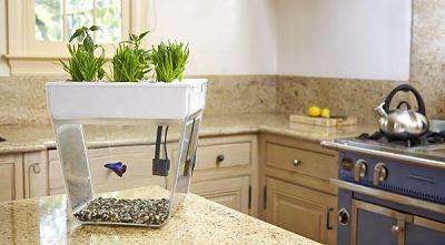 Aquariuam Ikan Hias Mini Yang Cocok Untuk Rumah Minimalis