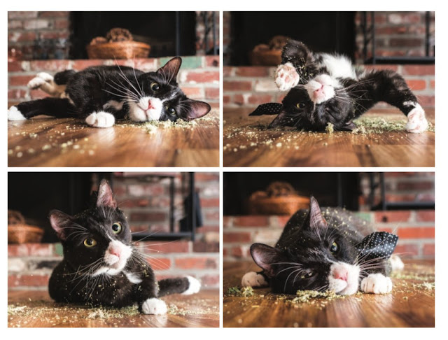 احلي صور قطط مضحكة