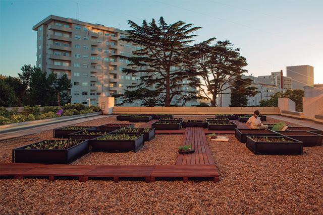 Hotel, Restaurante, Crowne Plaza, Horta, Cidade