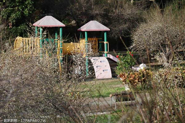 台中新社|2019梅林親水岸|梅花|炮杖花|民宿|露營區|戲水區|兒童遊樂區|親子景點