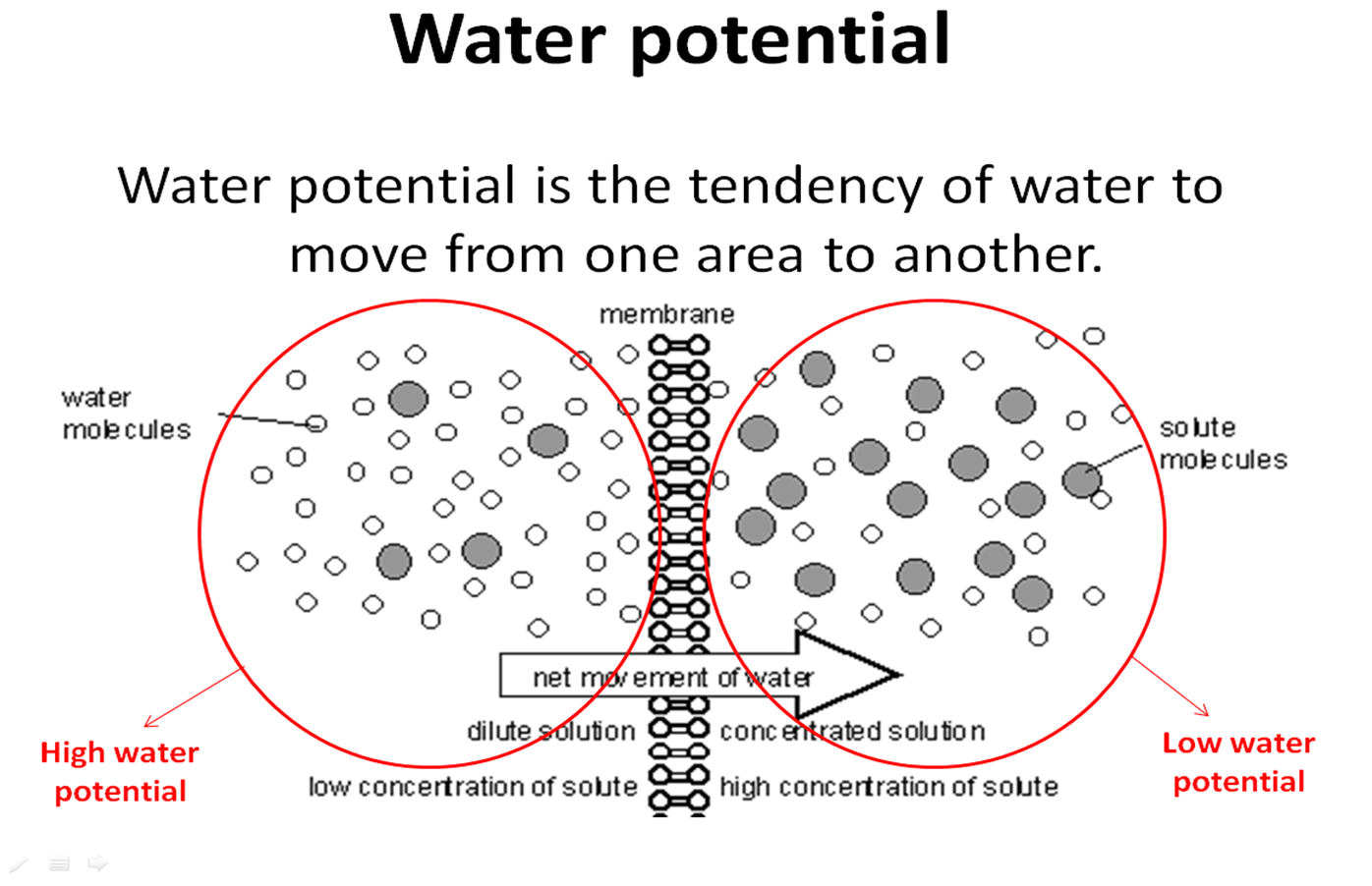 As biology coursework water potential