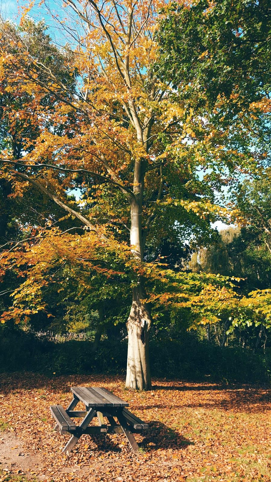Autumn Trees Their Stunning Colour Wheel