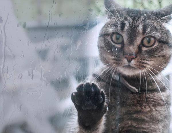 Chết cười với 23 hình ảnh thú cưng năn nỉ xin được vào nhà