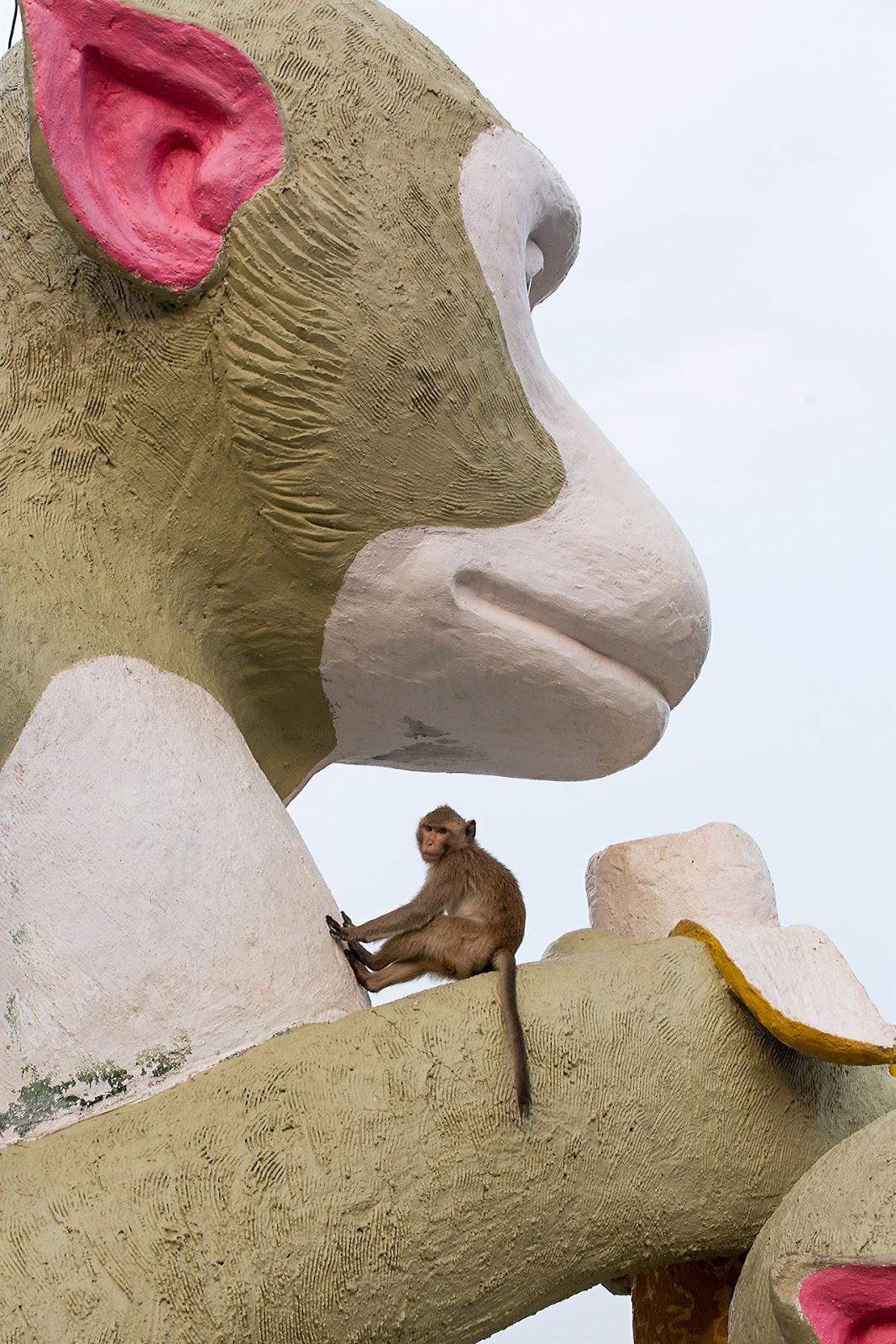 statua małpy,makak,Tajlandia