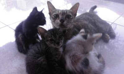 Mitos Kucing Hitam di Pulau Dewata Bali - Indonesia