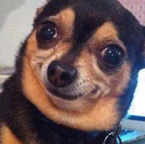 Cutest Dog Smile