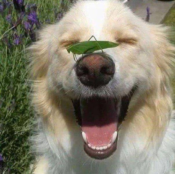 Funny animals of the week - 12 August 2016, animal photos, cute animal images