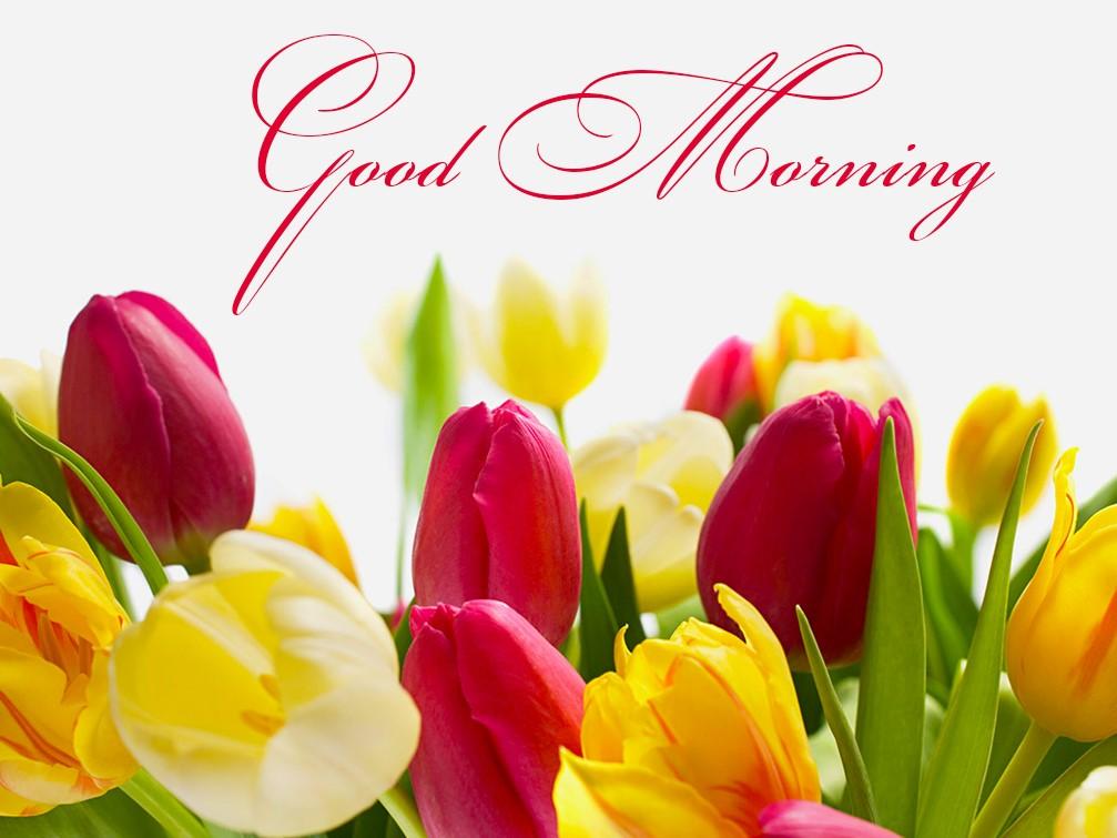 Good morning with beautiful yellow flowers mightylinksfo
