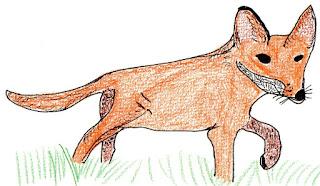 młody lis, przyroda w kwietniu