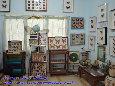 Jumalon Butterfly Collections