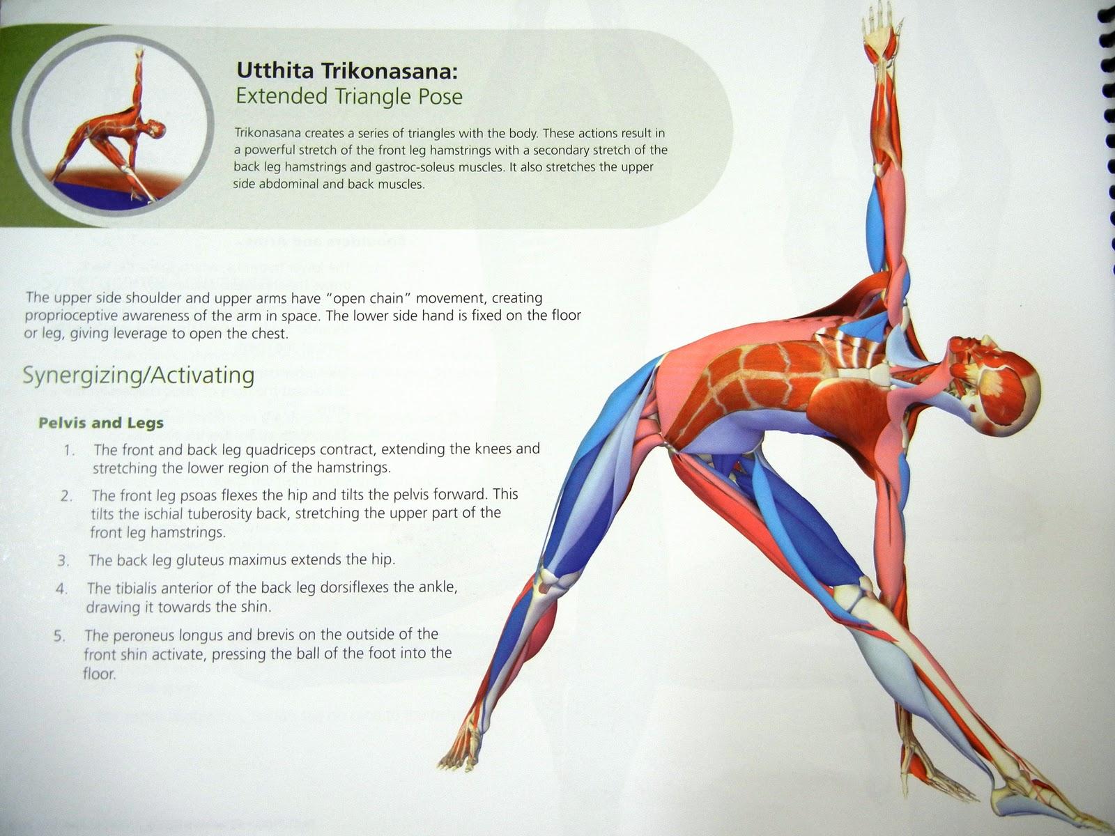 The Elegant Klutz: Utthita Trikonasana or Triangle Pose