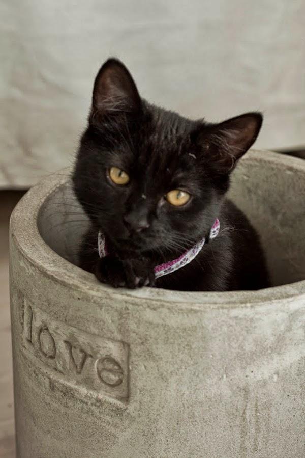 Black cat in concrete planter