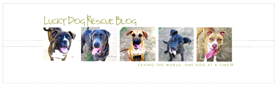 Lucky Dog Rescue Blog