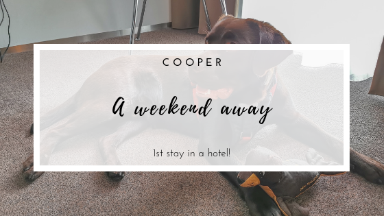 Cooper - A weekend away! We spend a night in a hotel with our 8-month chocolate Labrador, in the beautiful city of Zwolle, Netherlands.