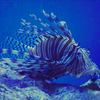 Marine Life Park adalah aquarium raksasa yang juga menjadi tempat wisata favorit di Singapore.