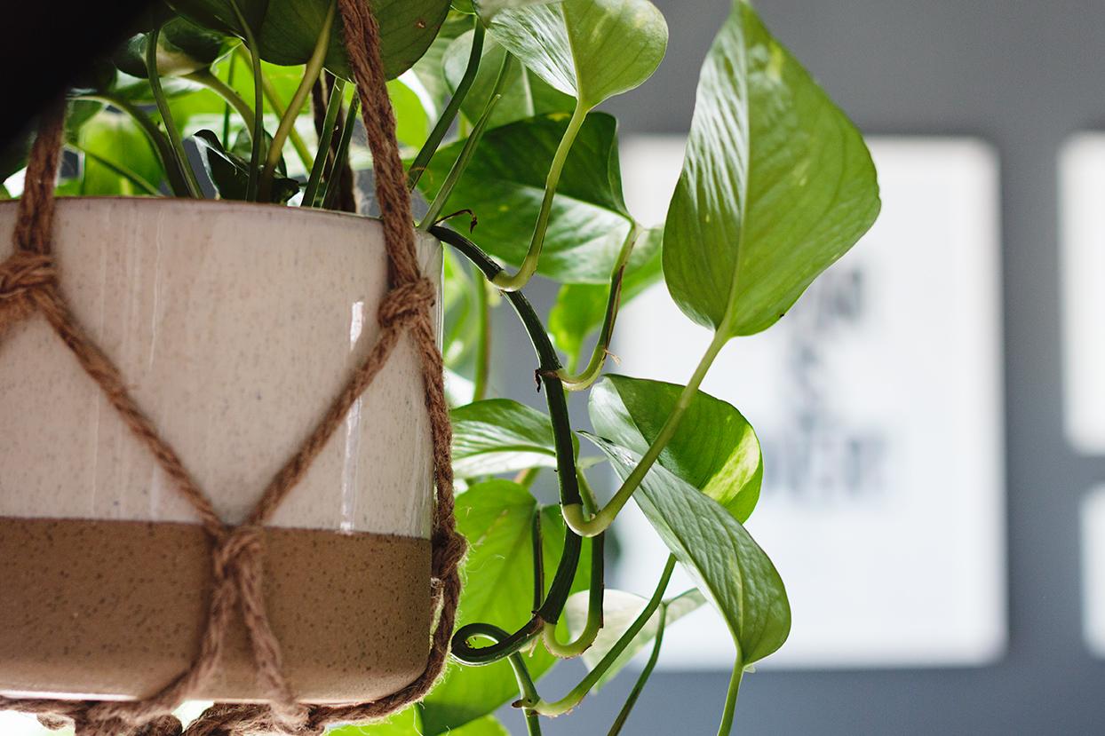 plantas de pendurar