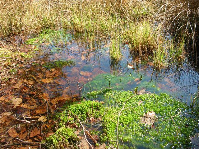 przyroda, rezerwat, torfowisko, woda