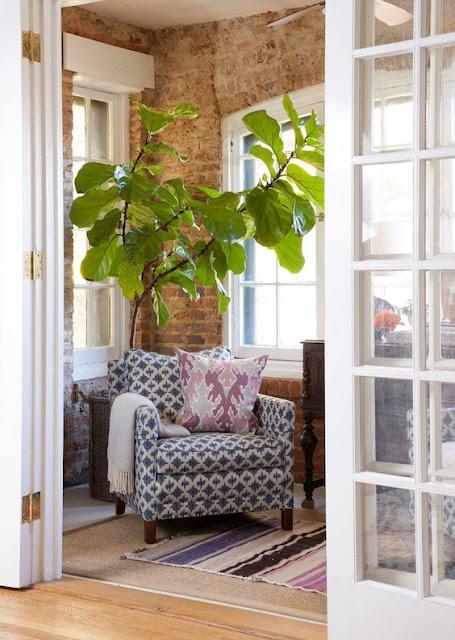 decoração-planta-ficus-lirata