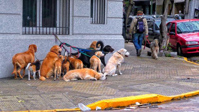 Grupo de perros atados en la vereda.