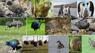 Uçamayan Kuşlar Listesi