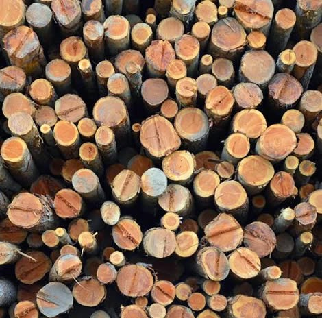 Timber Industry - Pile of freshly cut logs