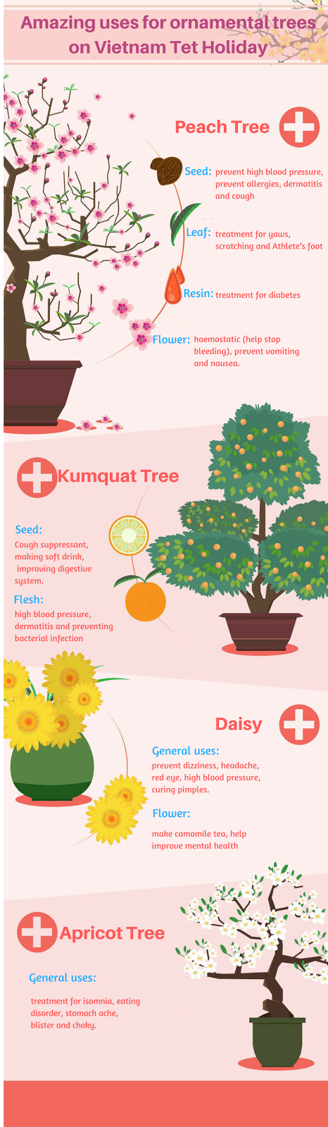 Tet holiday ornamental tree