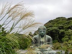 鎌倉大仏とススキ